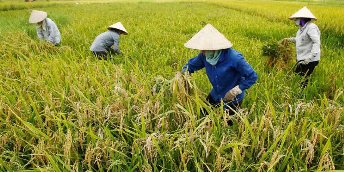สต๊อกข้าวสารไทย 6 ล้านตัน ยันพอบริโภคสู้โควิดแน่