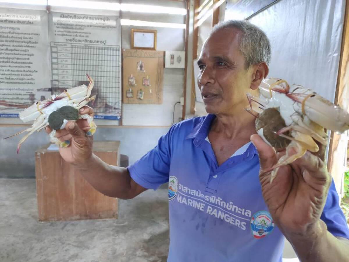 นายสมชาย เชื้อสง่า ธนาคารปูม้า กลุ่มประมงพื้นบ้าน ชุมชนคลองกำแพง บ้านบางโรง จ.ภูเก็ต