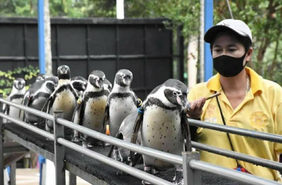 พาเหรดเพนกวิน