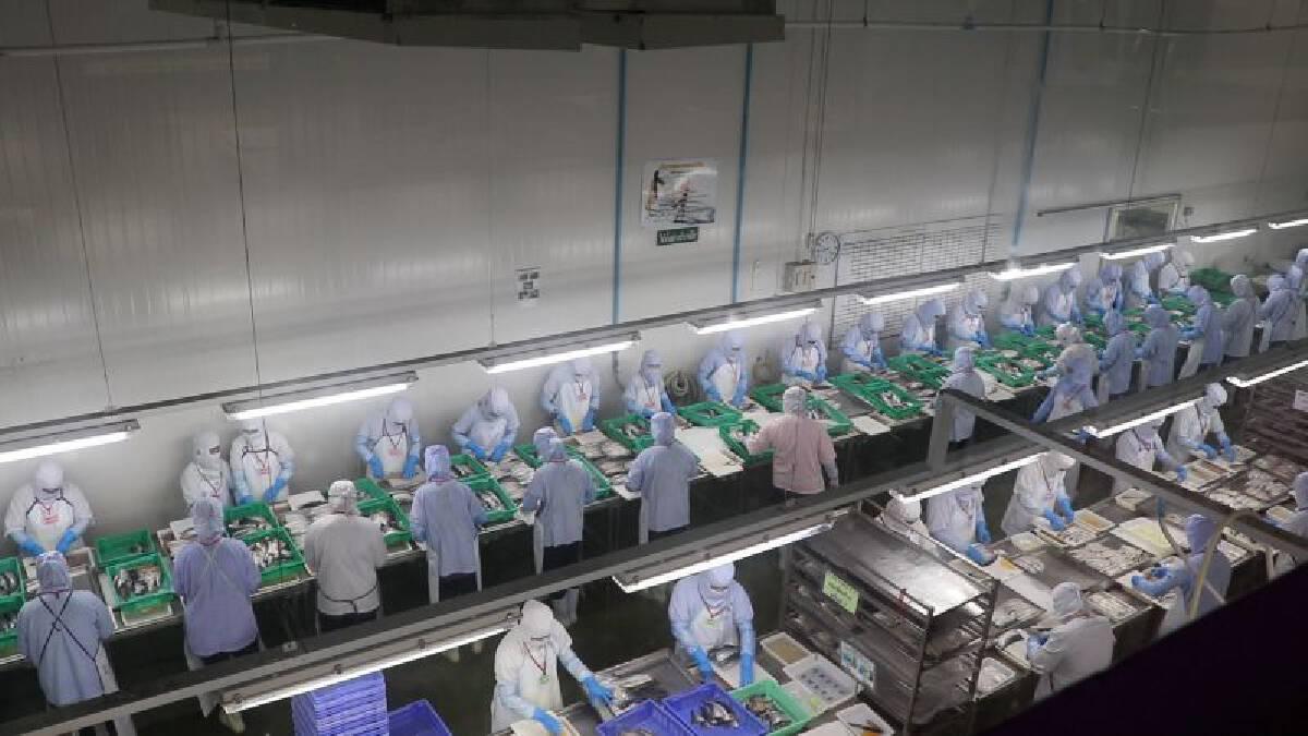 บรรยากาศการทำงานในโรงงานอาหารทะเลแช่เยือกแข็ง