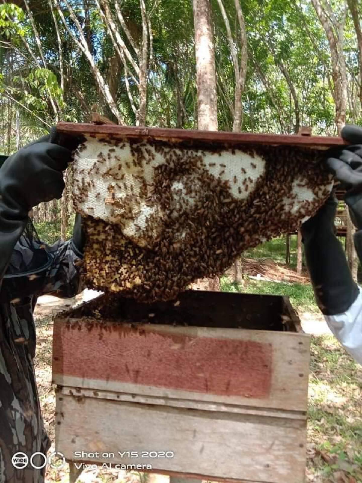 """ทำความรู้จัก """"น้ำผึ้งเดือนห้า"""" จากป่าชายเลน บ้านไหนหนัง จังหวัดกระบี่"""