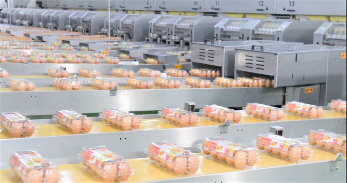 """""""ซีพีเอฟ"""" หนุน 7 คอมเพล็กซ์ไก่ไข่ ใช้เศรษฐกิจหมุนเวียน ช่วยลดต้นทุน"""