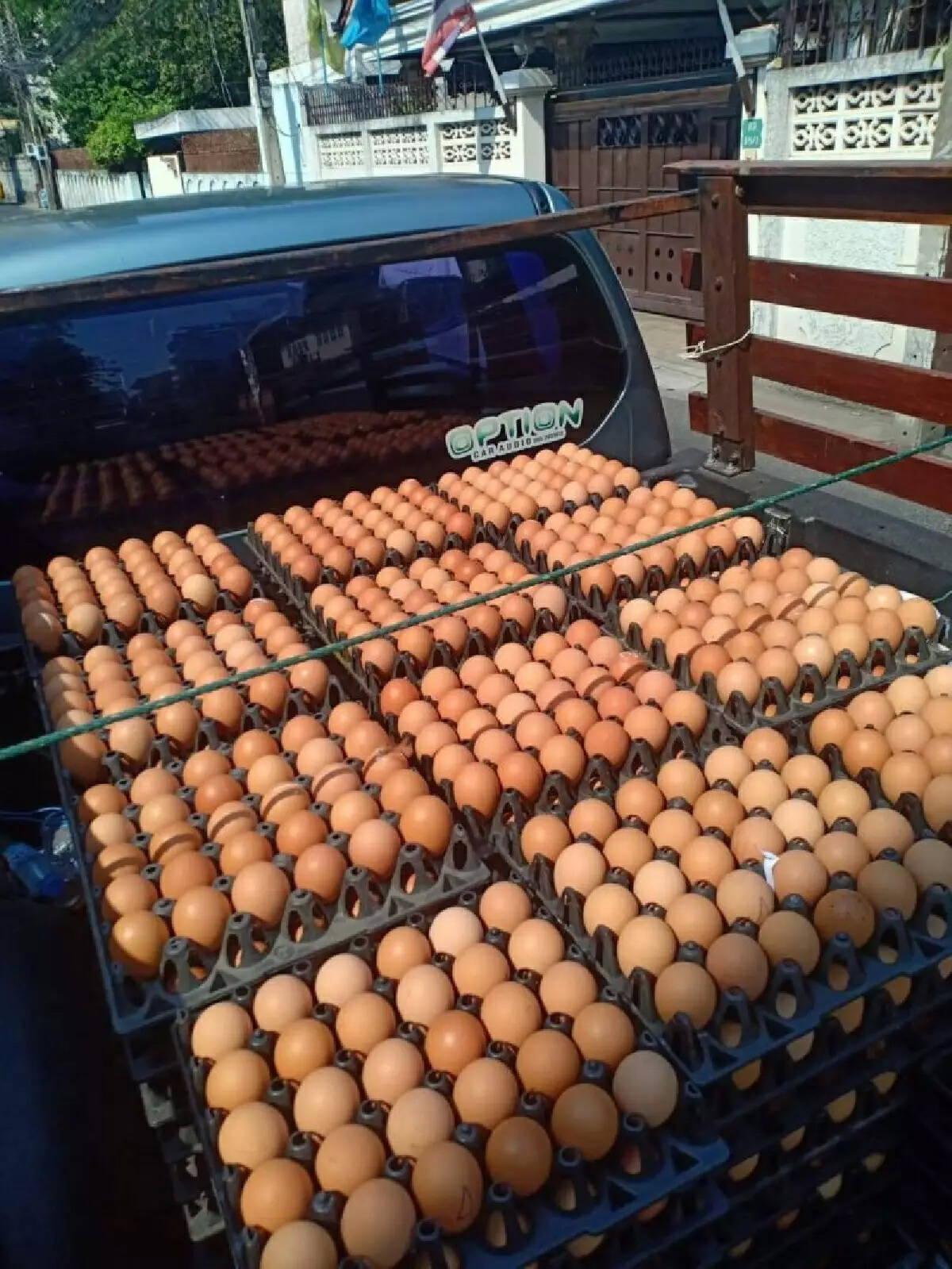 เคลื่อนย้ายไข่ไก่