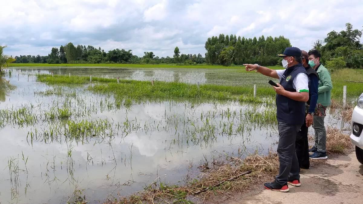 เช็คที่นี่ เกณฑ์เยียวยาเกษตรกร 2564 ประสบน้ำท่วม-ภัยพิบัติ ได้เงินกี่บาท
