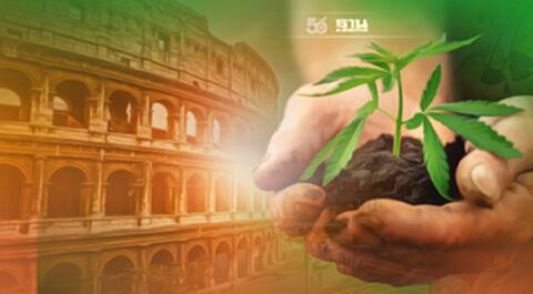 อิตาลีจ่อไฟเขียวประชาชน ปลูกกัญชาบ้านละ 4 ต้น