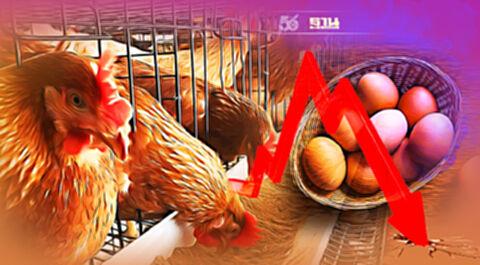 """ผวา """"กินเจ"""" ทุบราคาไข่ไก่ร่วง สั่งปลดแม่ไก่ ดันส่งออก"""